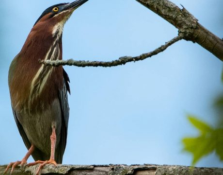 Birding at Buckeye Lake