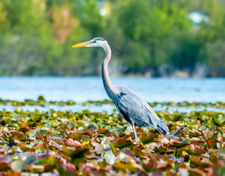 bird on the shore of a lake